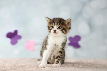 Cute little kitten on light background