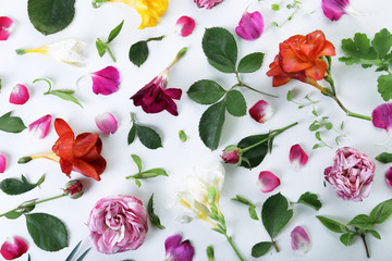Leaves and petals of spring flowers on white background, closeup