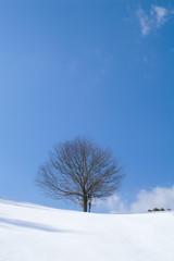 雪原の一本木