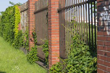 Brick and metal grate fence covered in green vine