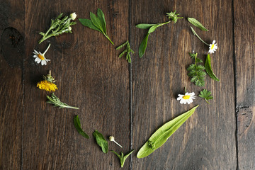 Various medicinal plants on wooden background Wall mural