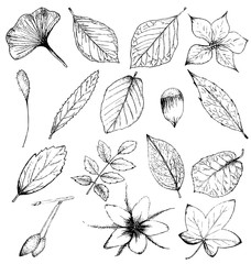 Collection of hand drawn plants, leaves and flowers