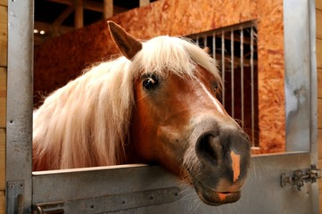 Portrait of a funny horse