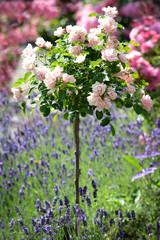 ein schöner Garten mit vielen Blumen