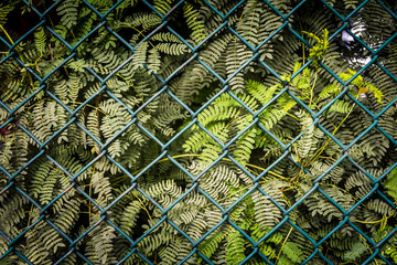 Wall Mural - Steel mesh fence with green plant