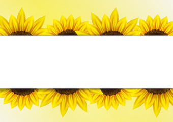 Sunflower vector background for image and text