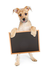 Wall Mural - Cute Terrier Puppy Holding Blank Chalk Board