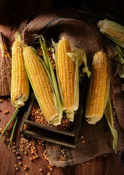 pannocchie di mais biologico sul tavolo di legno
