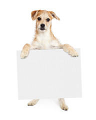 Wall Mural - Terrier Dog Standing Holding Blank Sign