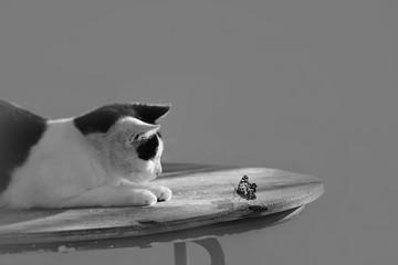 Gato que mira la mariposa en la mesa