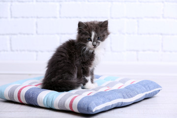 Cute gray kitten on pillow on floor at home