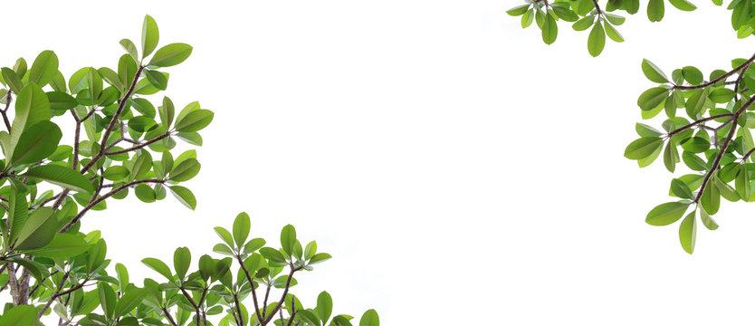 leaf frame no white background