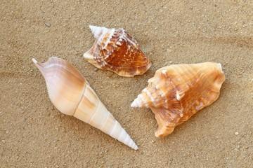 verschiedene Muscheln am Strand
