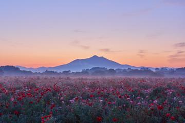 夜明けの筑波山とポピー畑