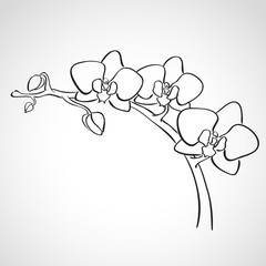 Sketch orchid branch