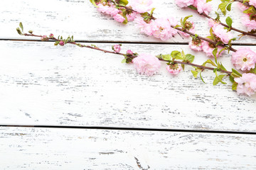 Spring flowering branch on white wooden background