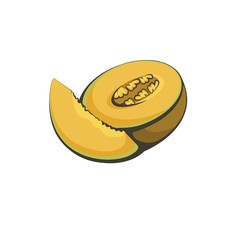 Vector illustration of fruit melon.