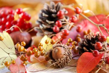 秋の実と葉