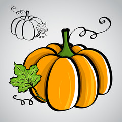 Sketch style vegetables - pumpkin