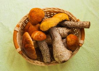 Forest boletus mushrooms in a wicker basket