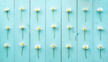 Photo sur Plexiglas Marguerites Summer Floral pattern with chamomile flower over blue-green vint