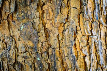 Nature patten broken surface bark