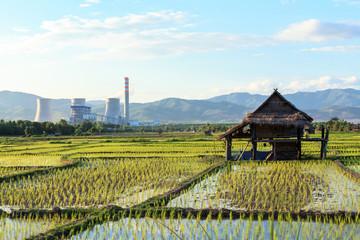 rice farm near power plant