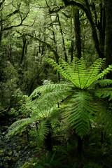 Beautiful forest, Milford trek, New zealand
