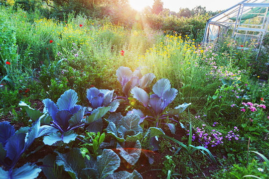 In the flower and vegetable garden