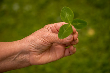 A womans hand picking a clover
