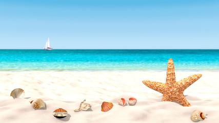 Shells and starfish on a sandy beach with a blurred background in order to focus on the foreground. Copy space available.