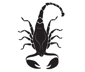 black scorpion for tattoo