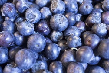 This is a photograph of Blueberries