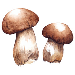 Watercolor two pair white mushrooms porcini vector isolated