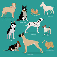 Set of flat sitting or walking cute cartoon dogs. Popular breeds