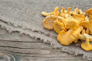 golden chantarelle mushrooms on a wooden table