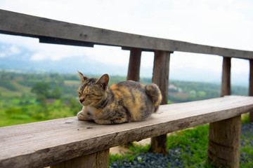 Cat sleeping on a wooden chair