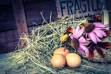 fragile - uova fresche