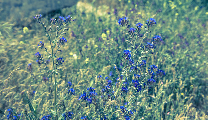 Wall Mural - blue wild flowers scene