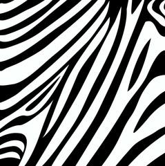 zebra stripe print vector