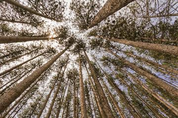 Trees landscape.