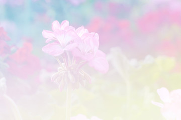 Sweet color flower for background design soft and blur style