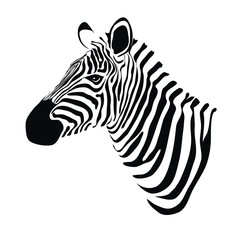 ZEBRA HEAD illustration vector