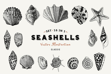 Set of vector vintage seashells. Nine black illustrations of shells on a beige background.