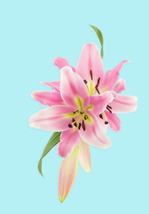 Illustration montage using oriental lily flower photographs, on pale blue background with light shadow.
