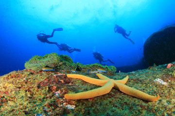 Scuba divers exploring a tropical coral reef with fish