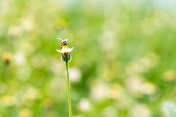 Bee on Little yellow flower