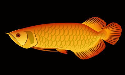 arowan dragon fish vector