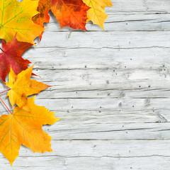 Bunte Ahornblätter auf altem Holz, Hintergrund, Holzfläche, Naturmaterialien, plakativ, Herbstaktion