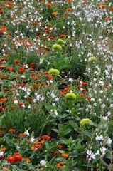Bunter Blumengarten mit Tagetes und Zinnien
